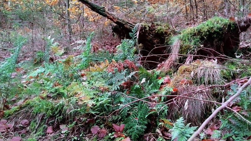 Waldnatur nave Die Schönheit des Waldes im Fall Herbstlicher Wald stockfoto