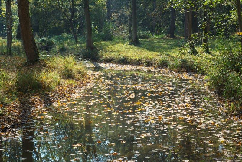 Waldnebenfluß im Herbst lizenzfreie stockbilder