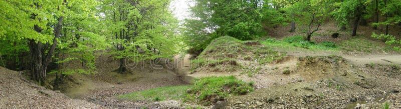 Download Waldpanorama stockbild. Bild von holz, oaken, blätter, bäume - 32095