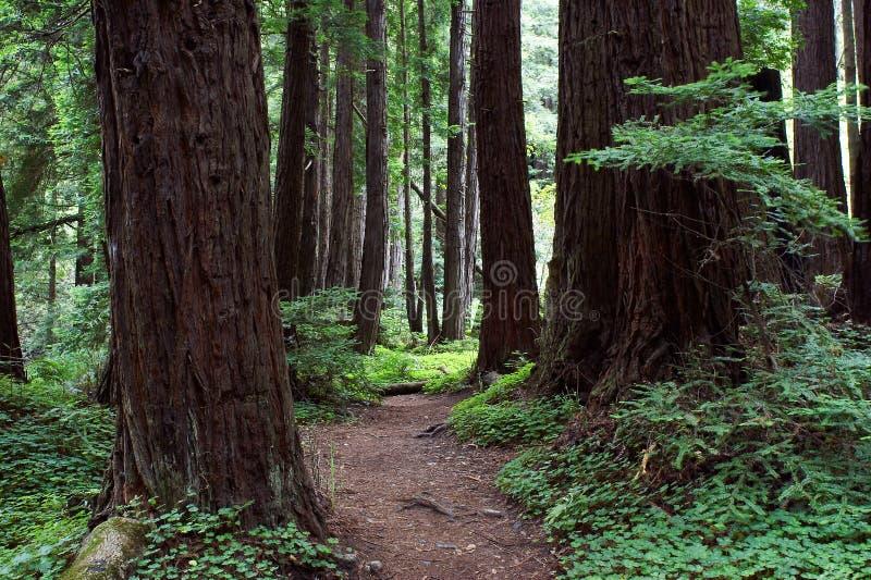 Waldpfad lizenzfreie stockfotografie