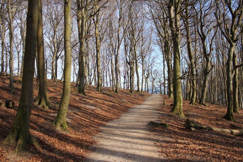Waldpfad auf Ruegen lizenzfreies stockbild