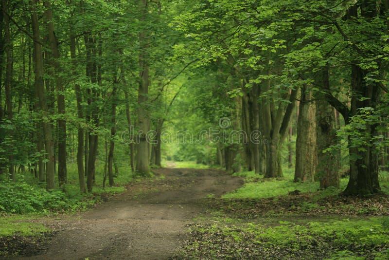 Waldpfad v2 lizenzfreies stockbild