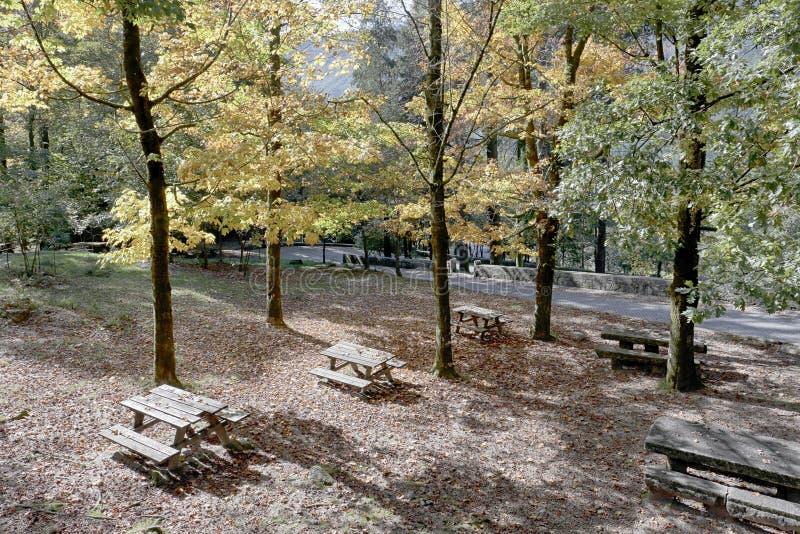 Waldpicknickpark lizenzfreies stockbild