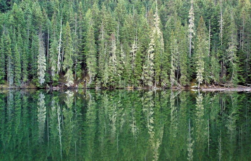 Waldreflexion stockbilder