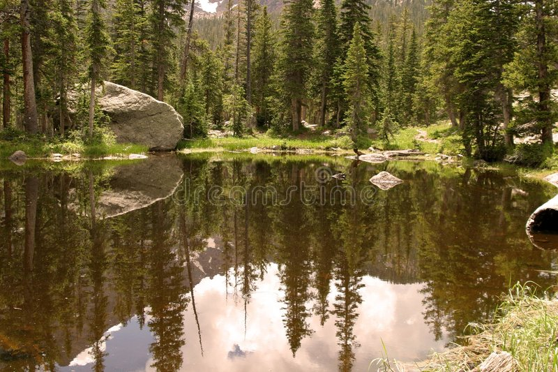 Waldreflexionen stockfotos