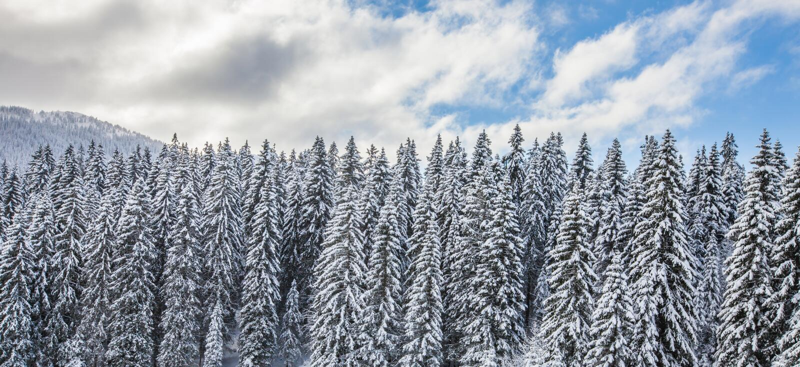 Waldschnee III stockbilder