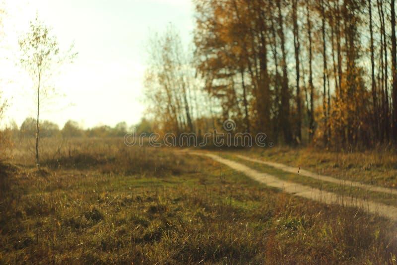 Waldschotterweg an einem heißen Tag stockfoto