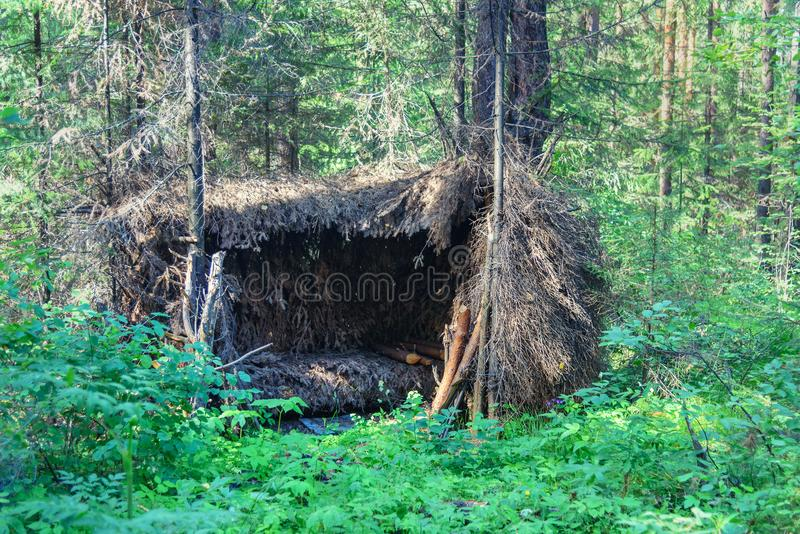 Waldschutz, Hütte im Wald lizenzfreie stockfotos