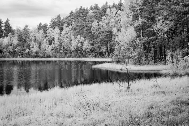 Waldsee am heißen Sommertag Infrarotbild lizenzfreie stockfotografie