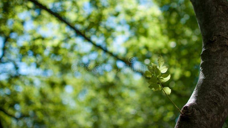 Waldsonnenlicht stockfoto