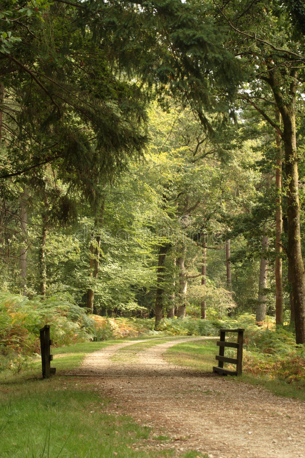 Waldspur lizenzfreie stockfotos
