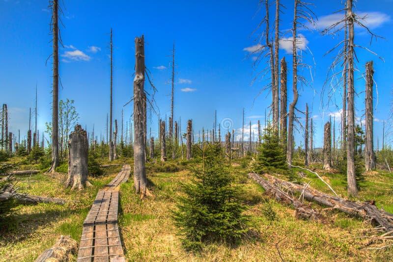 Waldsterben foto de archivo