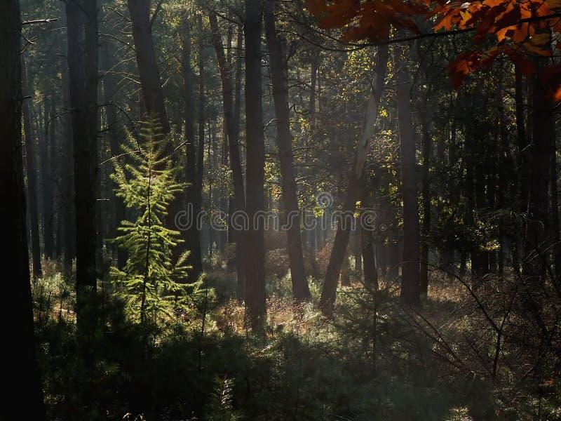 Waldszene stockfotos