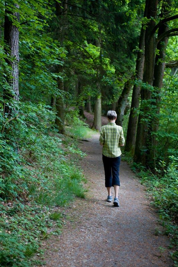 Waldszene 3 stockbild