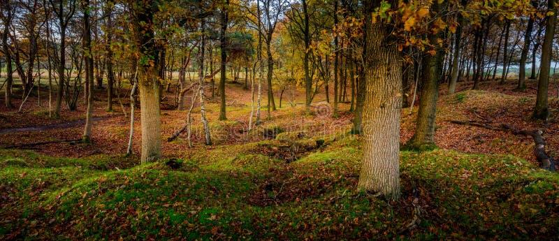 Waldszene im Wald stockfotos