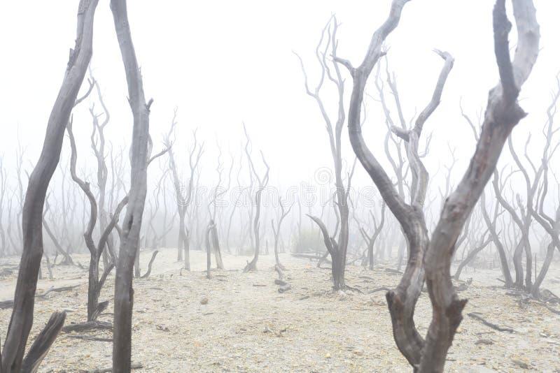 Waldtod, Dürre, Feuer, globales Warmning lizenzfreies stockbild