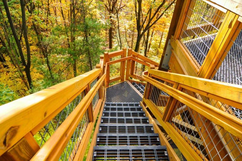 Waldturmschritte lizenzfreie stockbilder