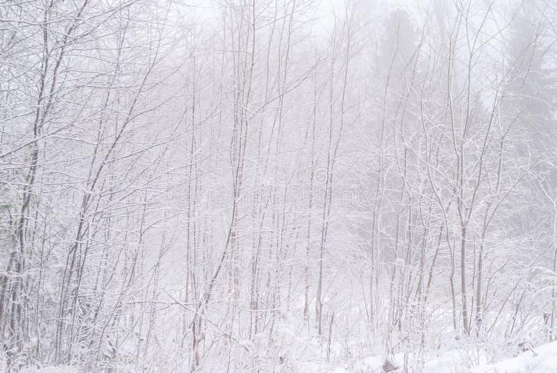 Waldung des verschneiten Winters stockfoto