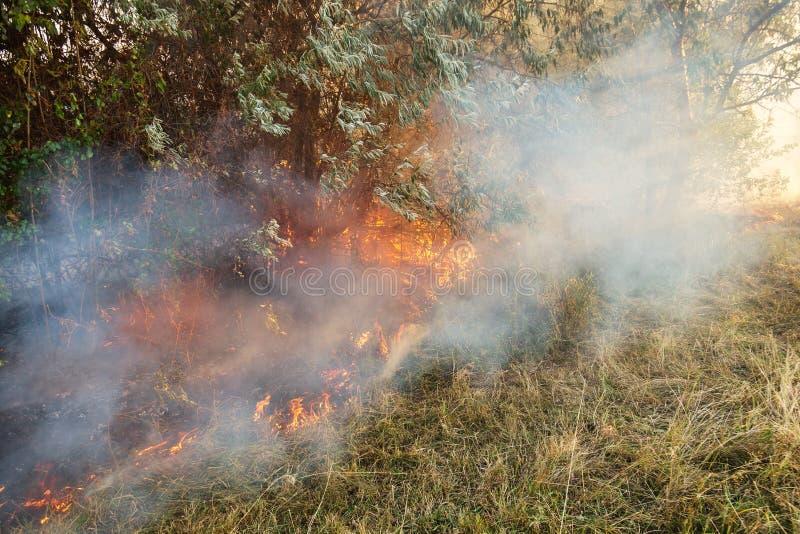 Waldverheerendes feuer wegen des trockenen windigen Wetters Helles Durchlaufen der Sonnenstrahlen schweren Rauch 3D übertragen lizenzfreie stockbilder