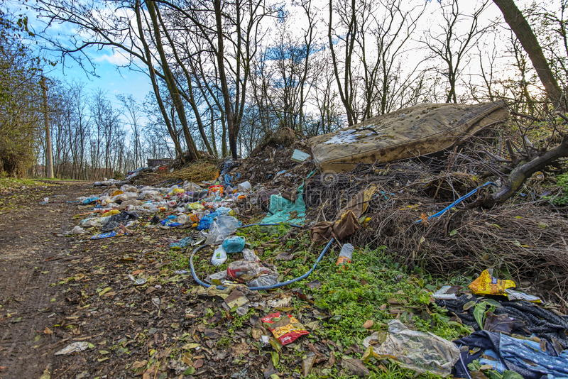 Waldverschmutzung 3 lizenzfreies stockfoto