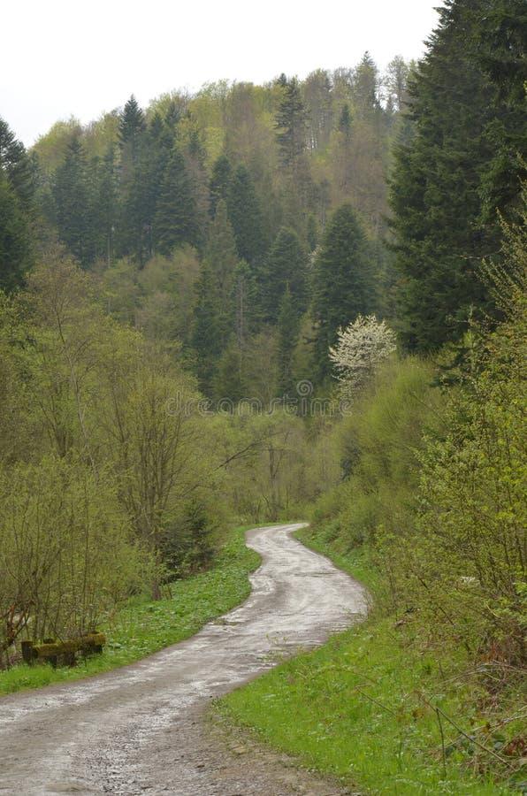 Waldweg in  Bieszczady Å opienka lizenzfreie stockfotos