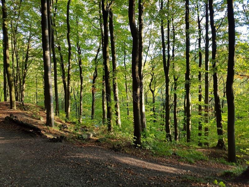 Waldweg stockbilder