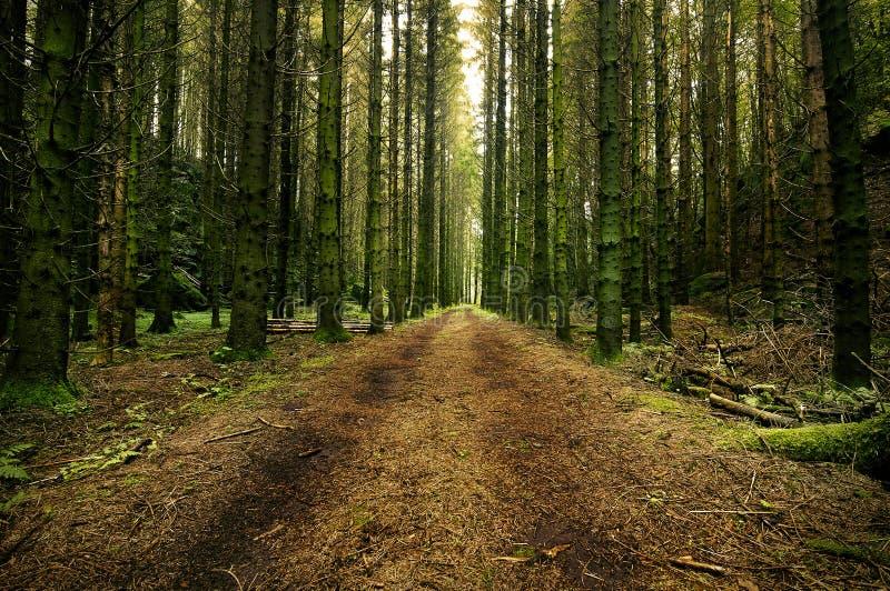Waldweg durch einen schwedischen Wald lizenzfreie stockfotos
