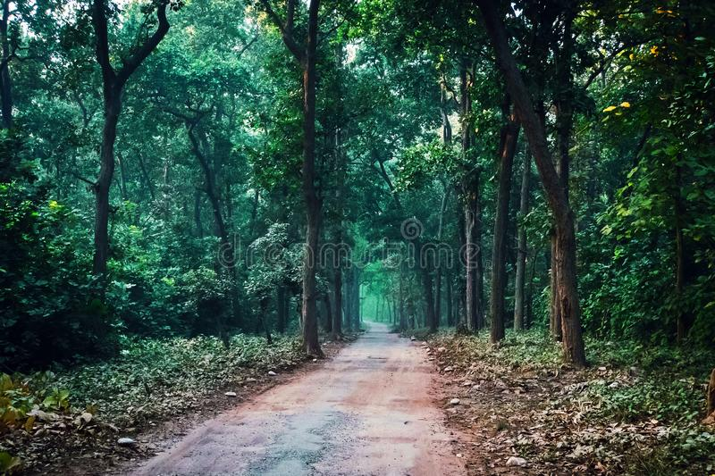 Waldweg durch Herbstlaub Safari im Nationalpark lizenzfreies stockbild
