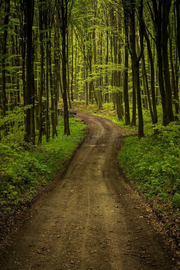 Waldweg im Bakony stockfotografie