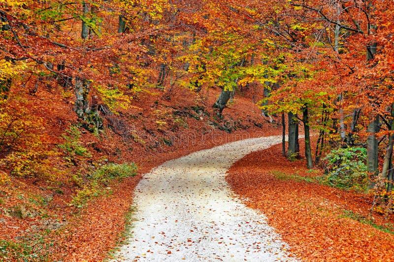 Waldweg im Herbst lizenzfreie stockfotos