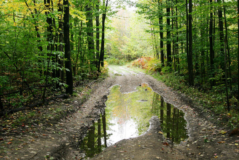 Waldweg mit Pfütze stockbilder