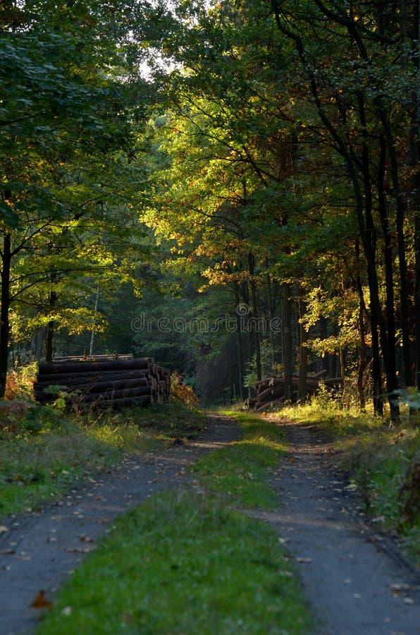 Waldweg mit Sonnenlicht lizenzfreies stockbild