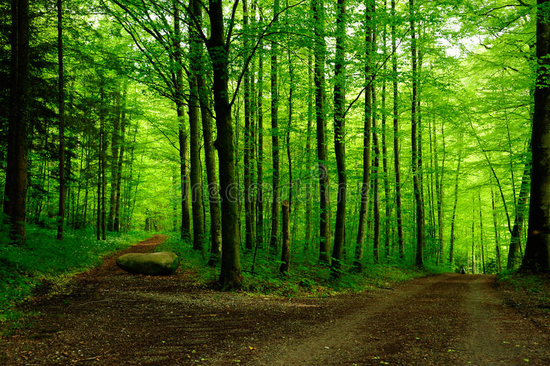 Waldweg mit zwei Möglichkeiten stockfotografie