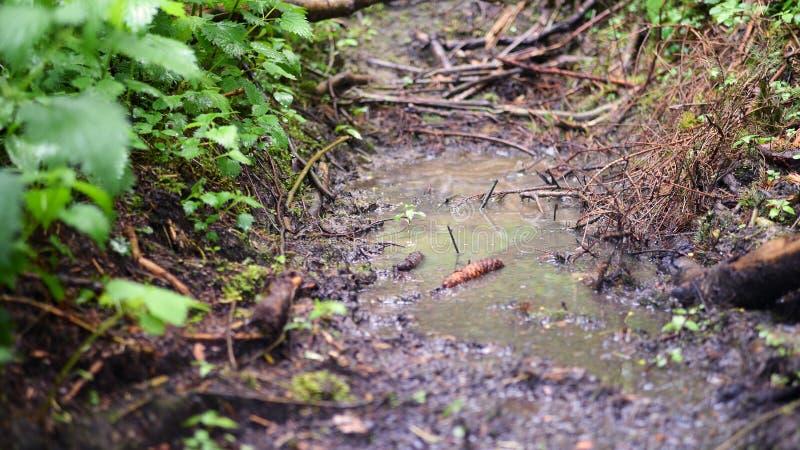 Waldweg /morning stockbild