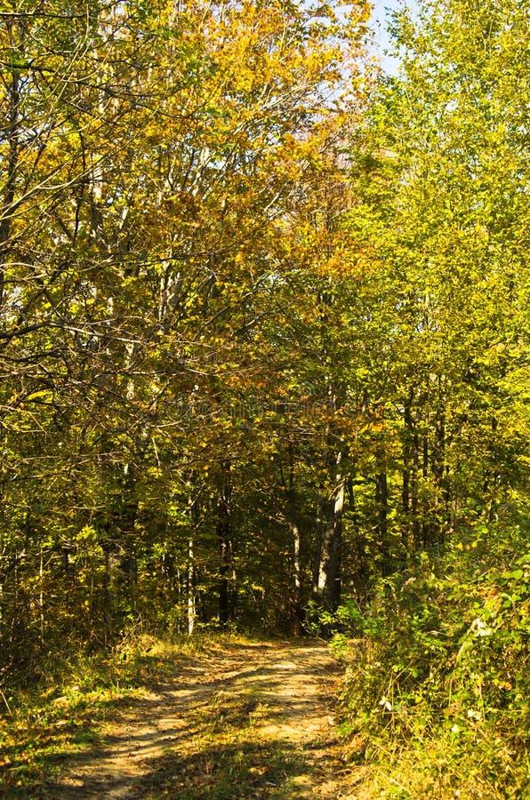 Waldweg am sonnigen Tag des Herbstes in Nationalpark Djerdap lizenzfreie stockfotografie