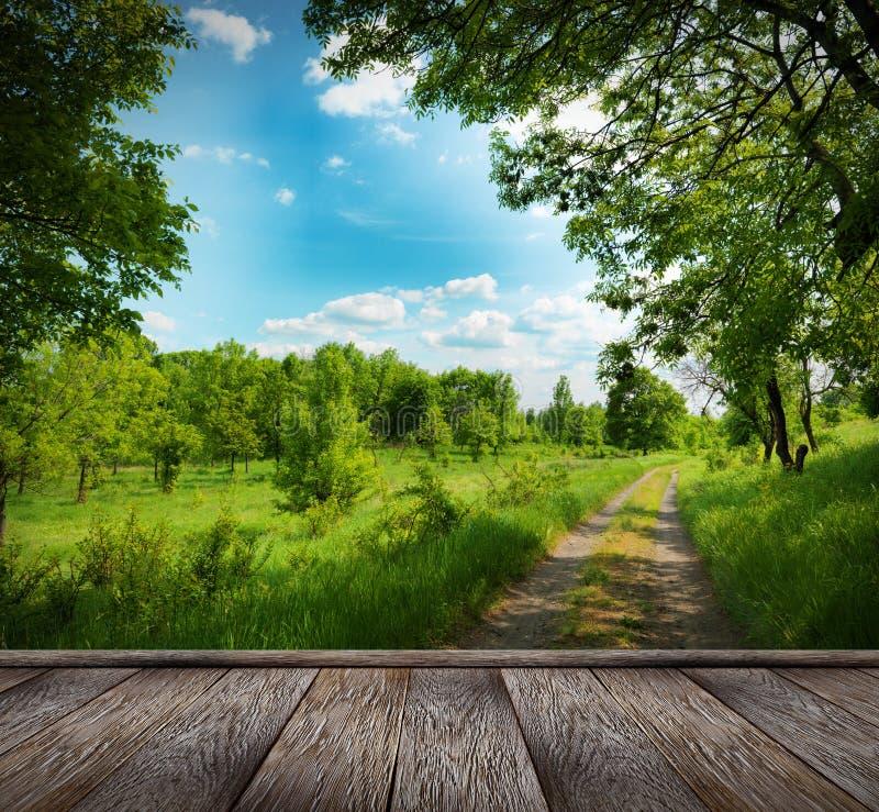 Waldweg und blauer Himmel lizenzfreies stockbild