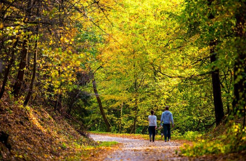 Waldweg und ein Paargehen stockfotos
