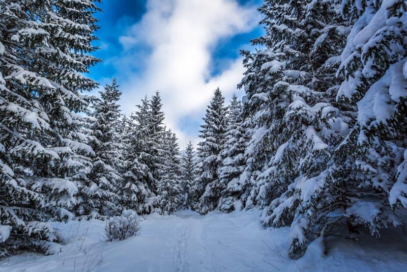 Waldweg zwischen den Bäumen im Winter lizenzfreies stockbild