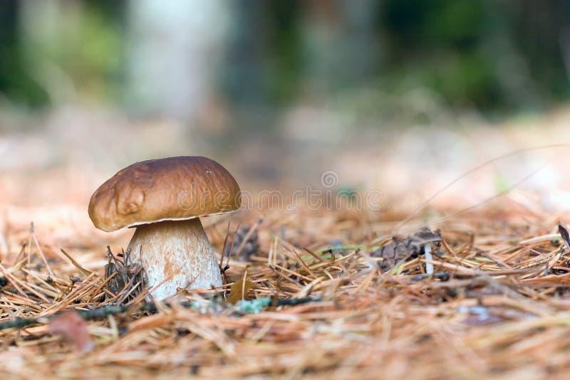 Waldwege lizenzfreie stockfotografie
