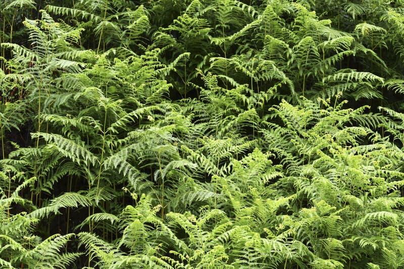 Waldwilder grüner Busch stockfotografie