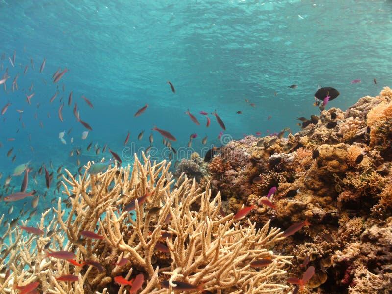 Walea Marine Park foto de stock royalty free