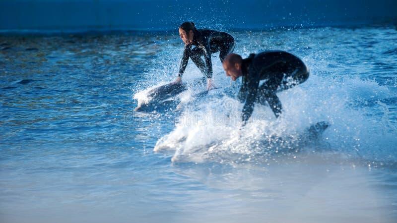 WALENCJA HISZPANIA, LISTOPAD, - 3, 2010: Dolphinarium, delfinu przedstawienie Mężczyzny i kobiety jazda na delfinie zdjęcia royalty free