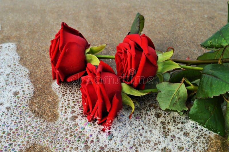 Walentynka, symbole zdjęcie royalty free