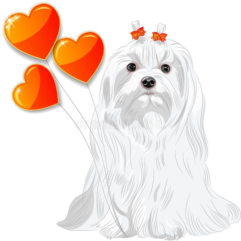 Walentynki karta z psim maltańczykiem i sercami ilustracji