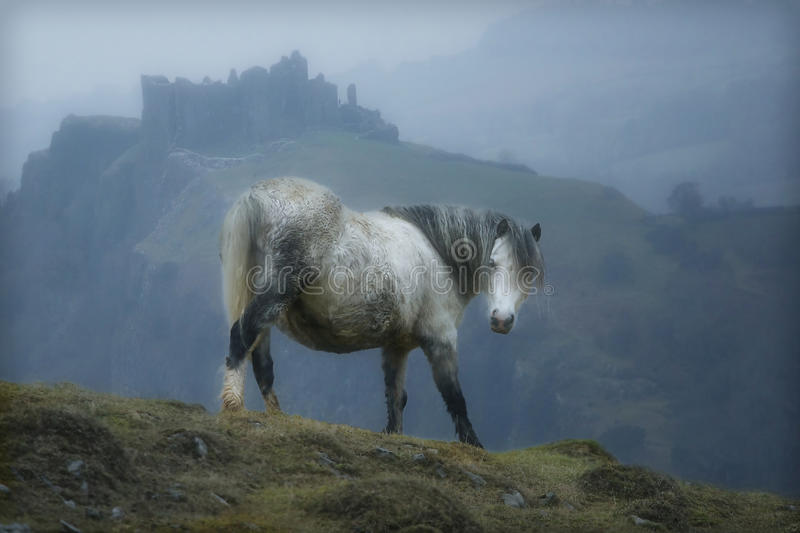 Wales Castle Horse. A horse poses perfectly while standing in front of Cerreg Cennen Castle in Wales royalty free stock images
