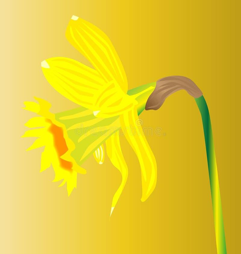 Walesisk påsklilja för den helgonDavids dagen royaltyfri illustrationer