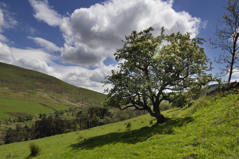 Waliser-Landschaft in den brecon Leuchtfeuern lizenzfreie stockfotos