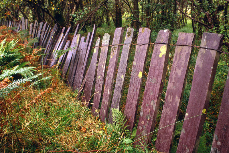 Waliser-Schieferzaun, Snowdonia, Wales stockbilder