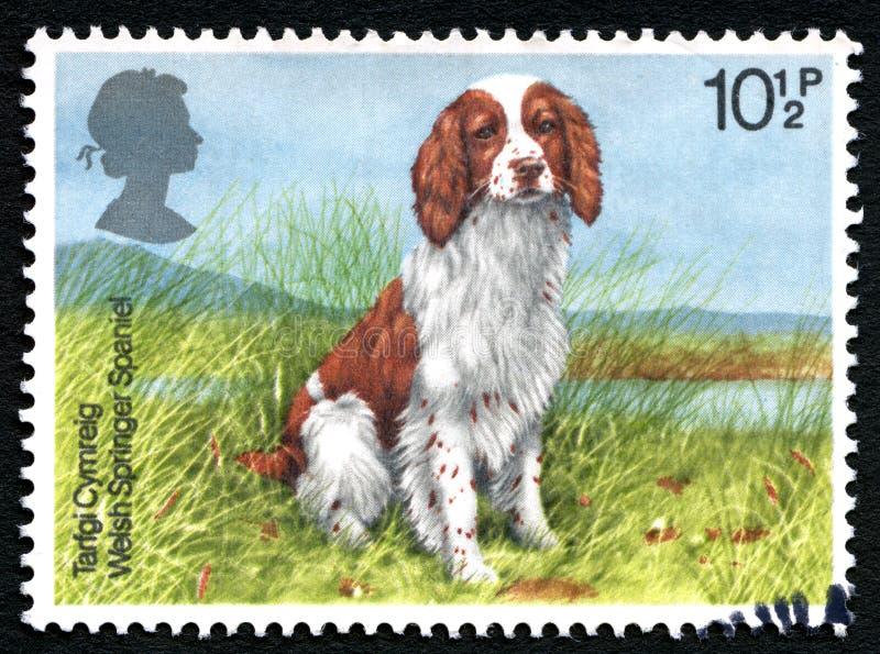 Waliser-Springer-Spaniel-BRITISCHE Briefmarke lizenzfreies stockfoto
