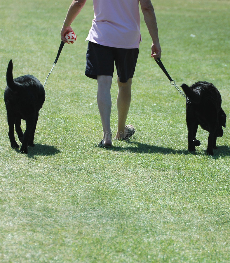 Download For a walk stock image. Image of dogs, hand, outdoors, walk - 177511